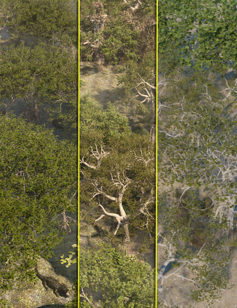 Low Resolution Tropical Trees and Shrubs_DAZ3D下载站