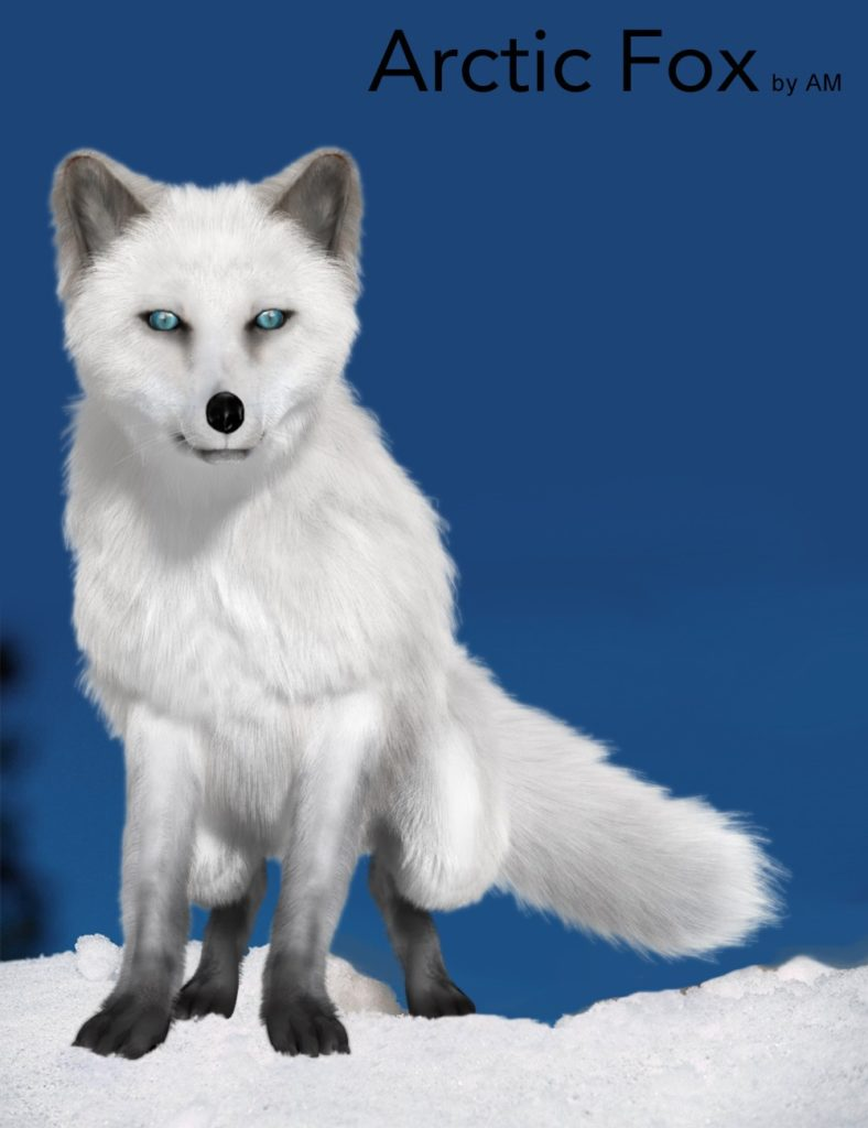 Arctic Fox by AM_DAZ3D下载站