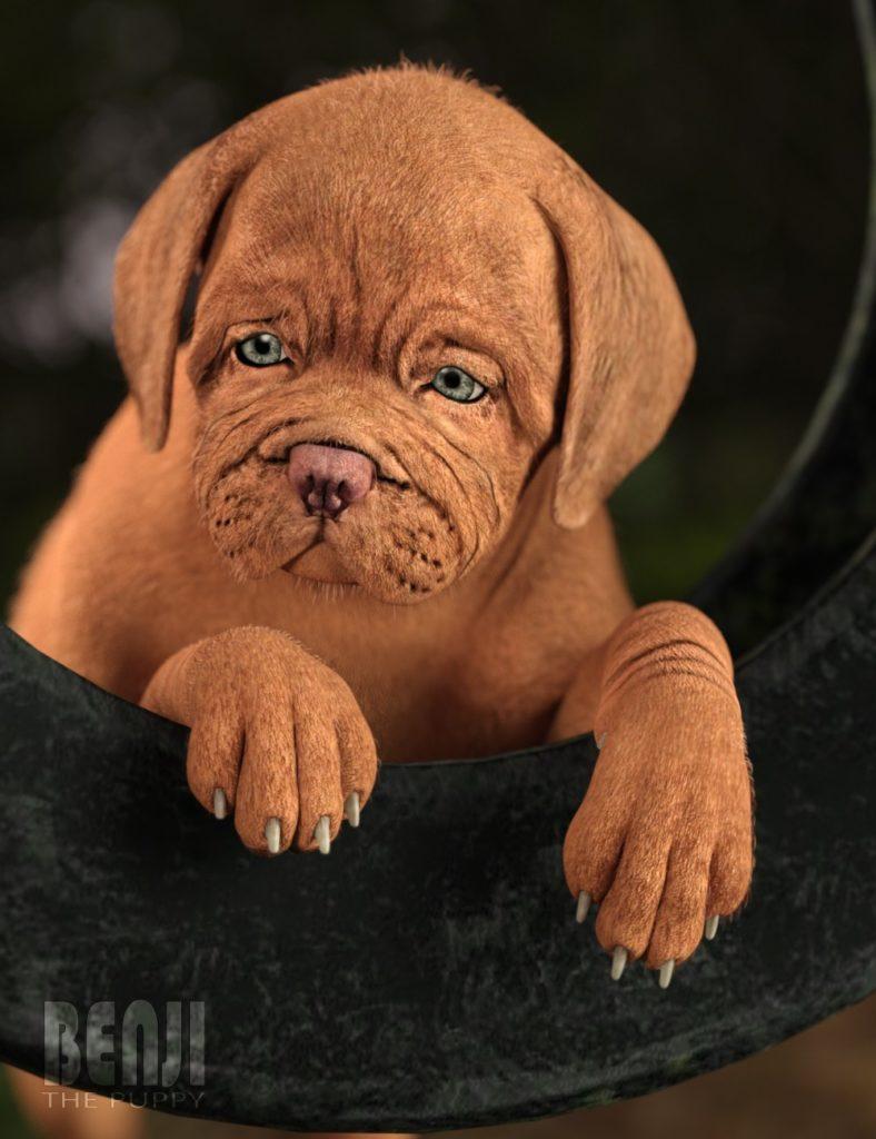 Benji The Puppy HD for Daz Dog 8_DAZ3D下载站