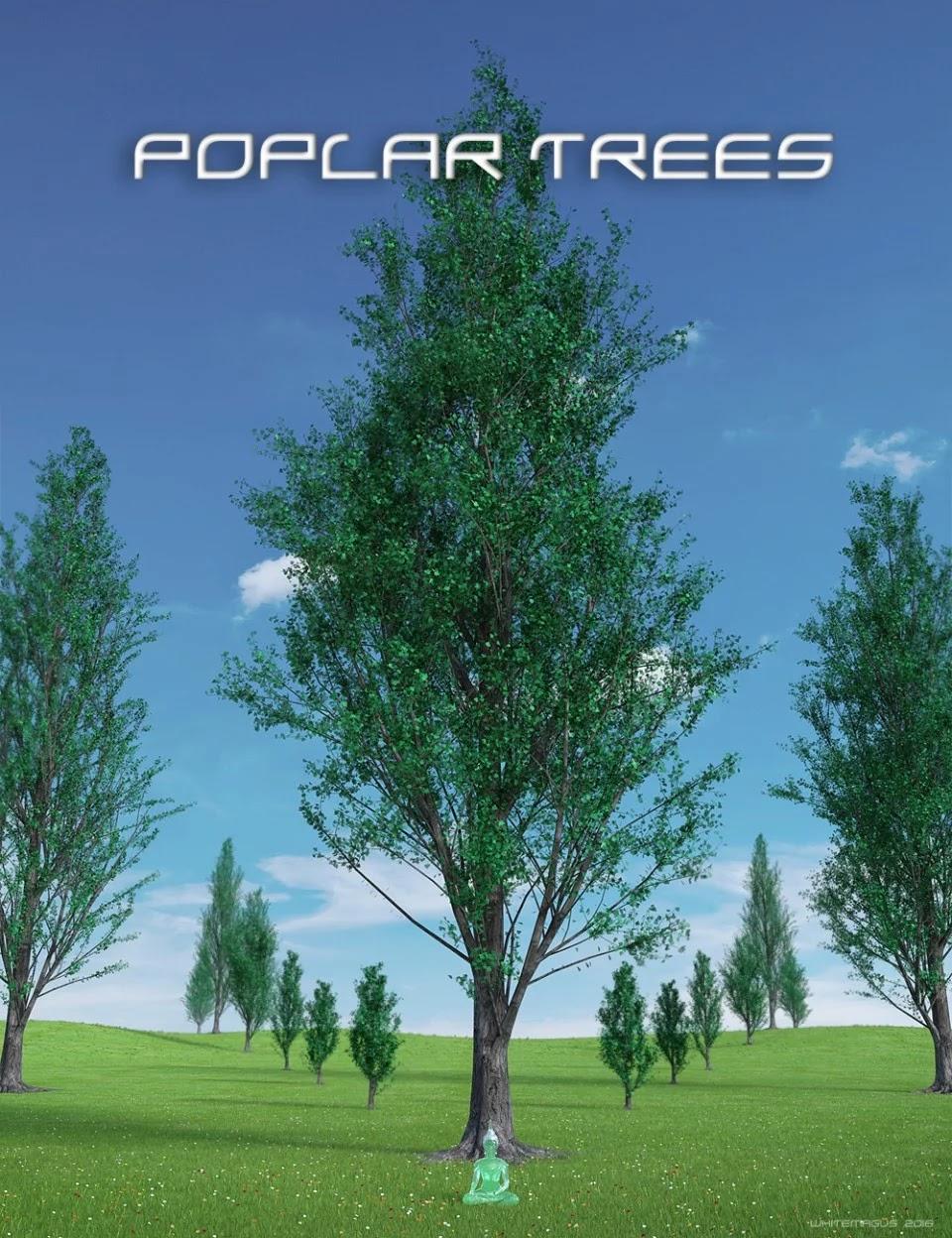 Poplar Trees Collection_DAZ3D下载站