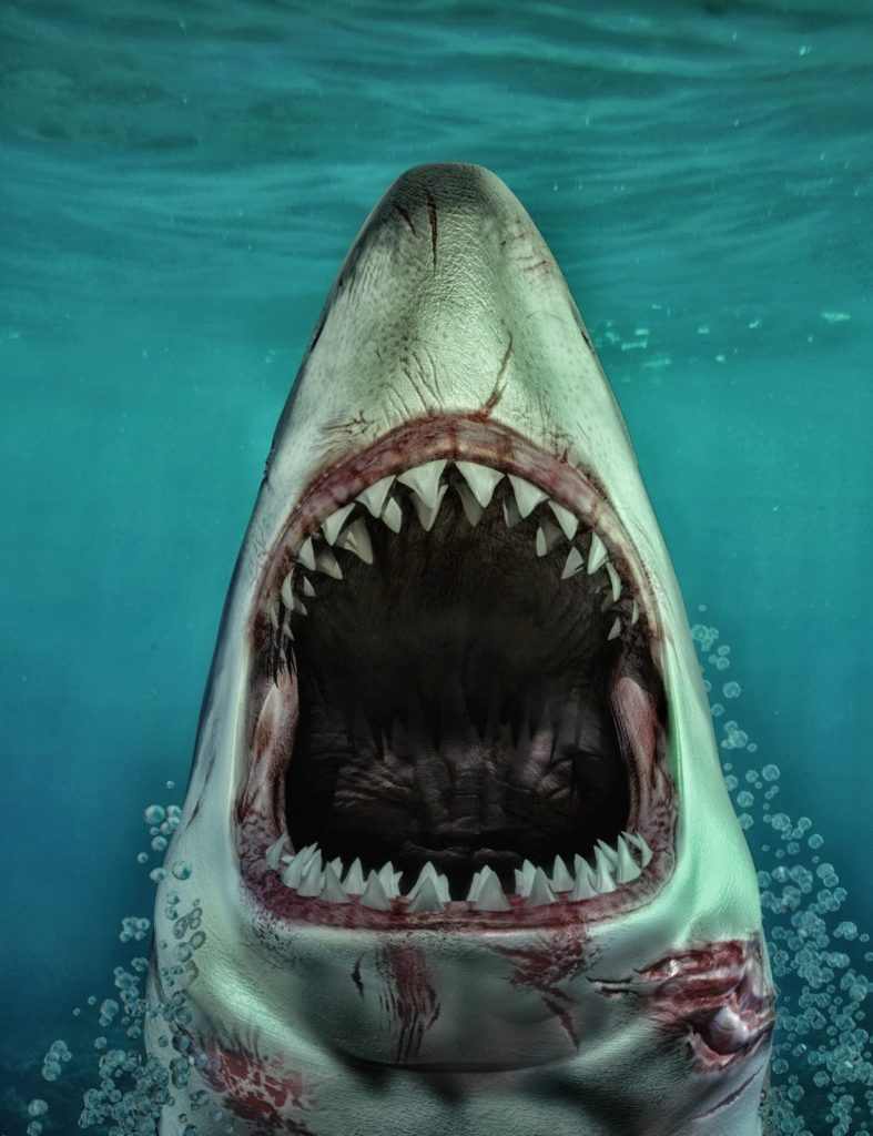 Sharks by AM: Great White_DAZ3D下载站
