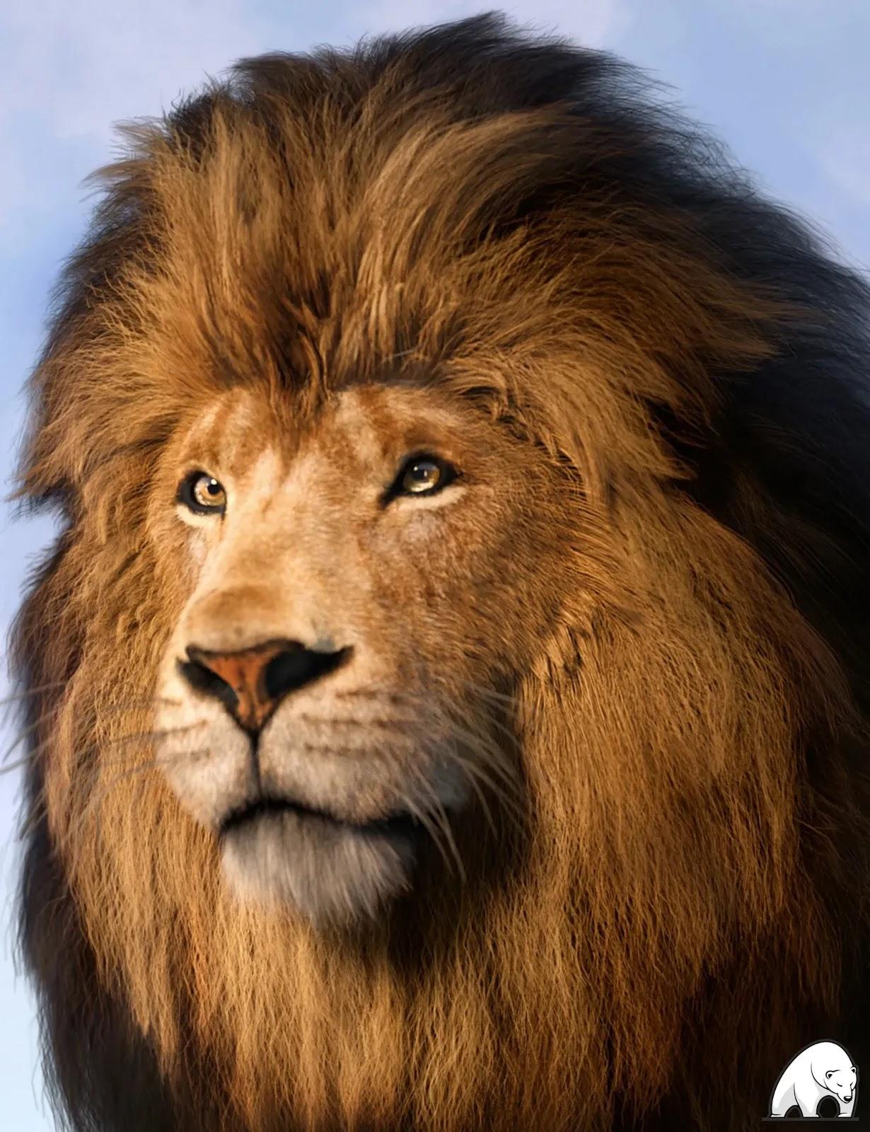 Felidae by AM – Lion_DAZ3D下载站