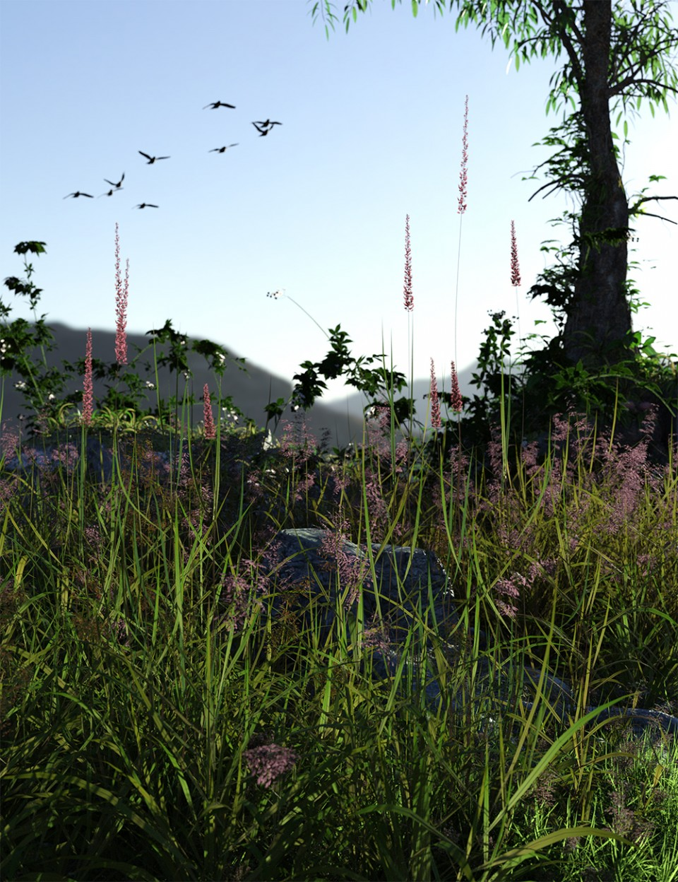 Long Grass – Essential Grassland Flowers and Plants_DAZ3D下载站
