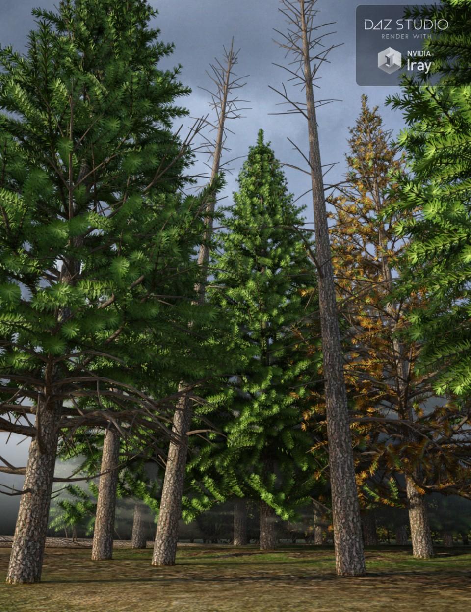 Evergreen Fir Trees_DAZ3D下载站