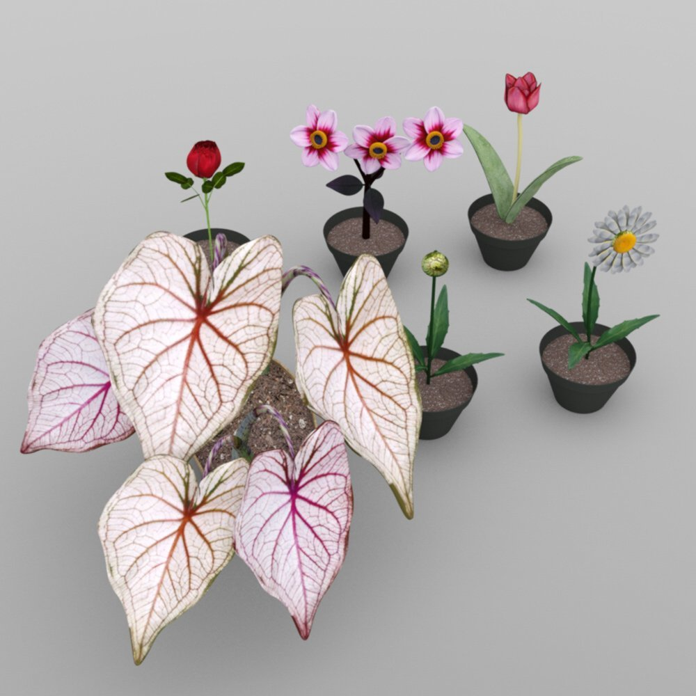 Plants Set 2 for DAZ Studio_DAZ3D下载站