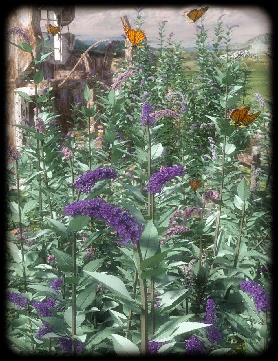 Buddleia – Butterfly Bushes_DAZ3D下载站