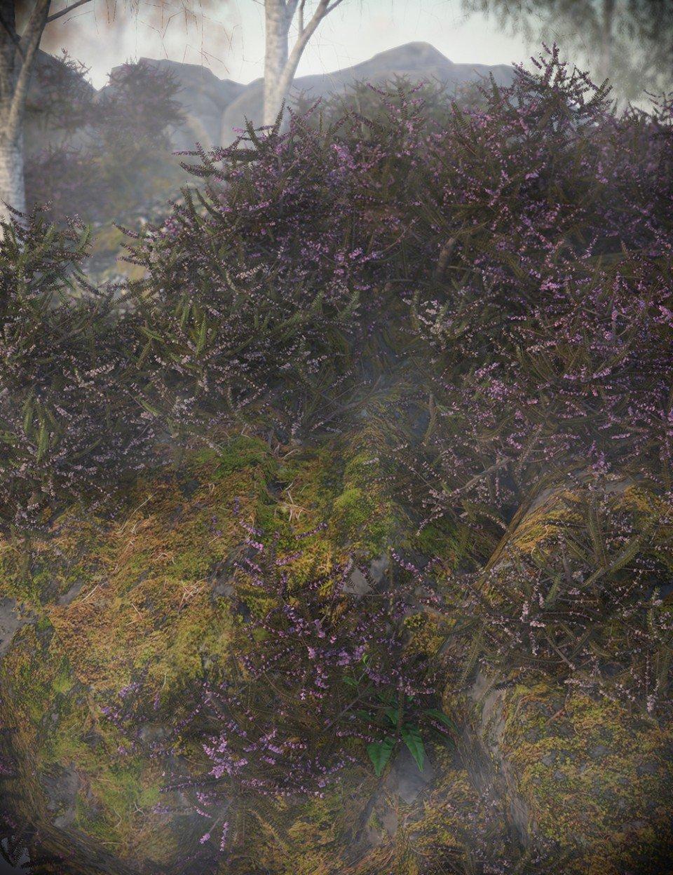 Heather – Heath and Moorland Plants for Daz Studio_DAZ3D下载站