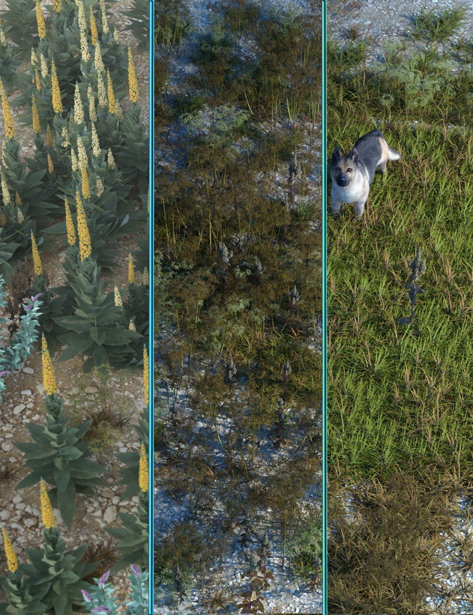 Wasteland Plants and Weeds – Low Resolution Instant Ecosystems_DAZ3D下载站