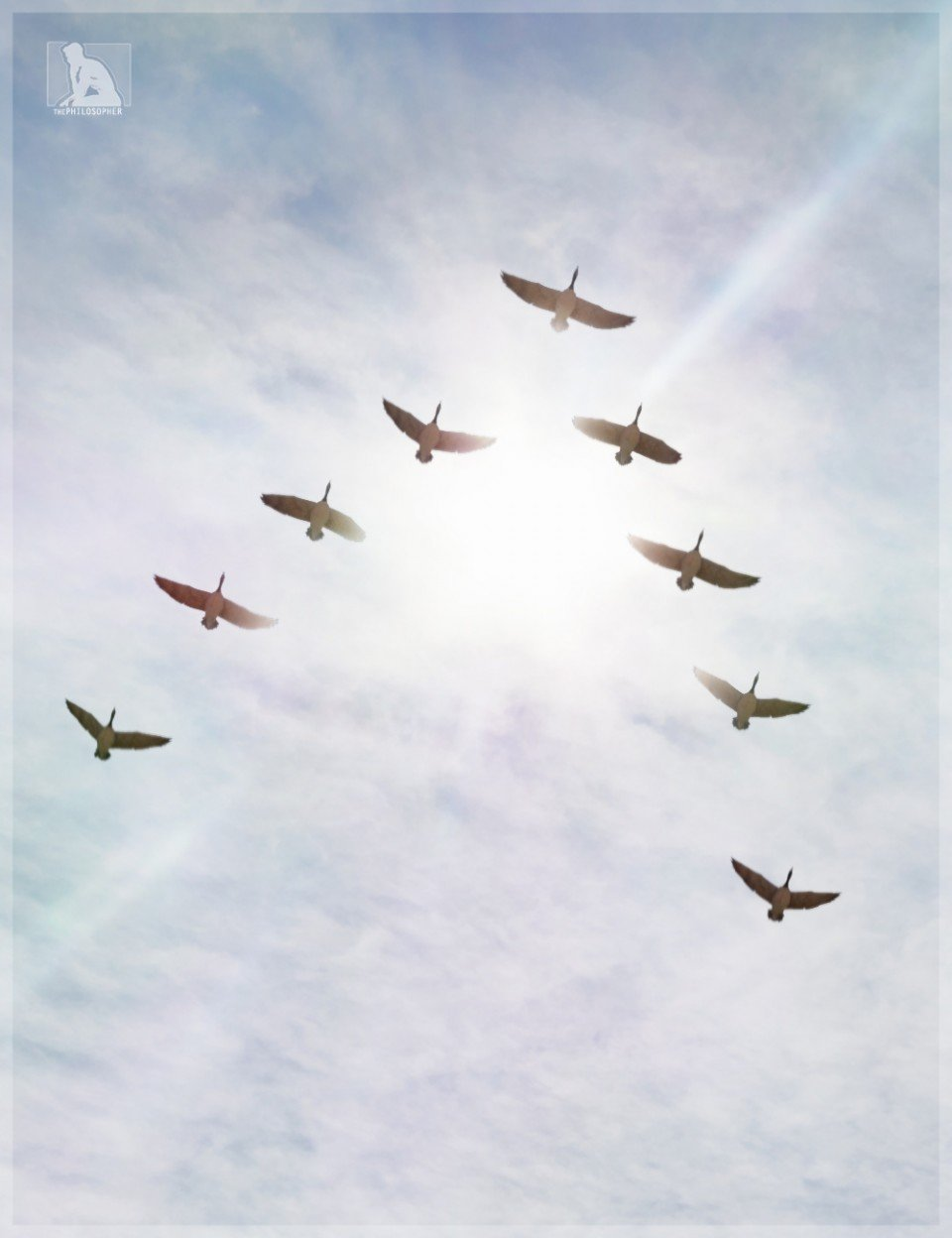 iREAL Animated Flocks of Birds_DAZ3D下载站